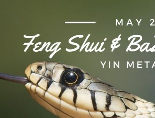 May 2020 Yin Metal Snake Feng Shui & BaZi Update