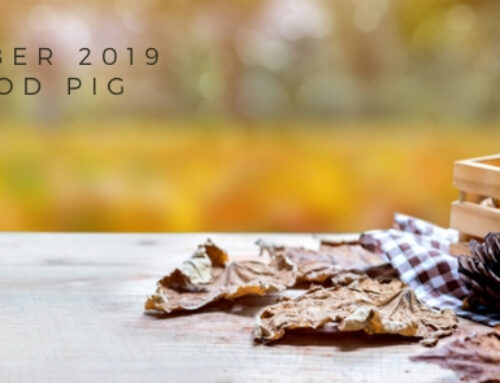 November 2019 Yin Wood Pig Feng Shui & BaZi Update