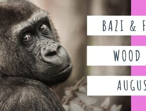 August 2020 Yang Wood Monkey Feng Shui & BaZi Update