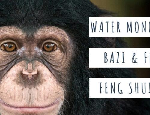 August 2019 Yang Water Monkey Feng Shui & BaZi Update